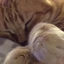 Ugo dorme pacifico