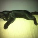 Matilda a pelle di leo...gatto!