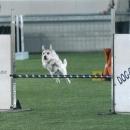 Maya in azione in un bellissimo salto!